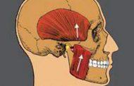 مشکلات مفصل فکی گیجگاهی و ارتباط آن با ارتودنسی- (1) مقدمه